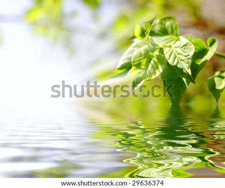 green leaves and sun light - stock photo