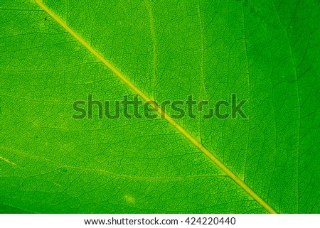 Green leaves background. - stock photo