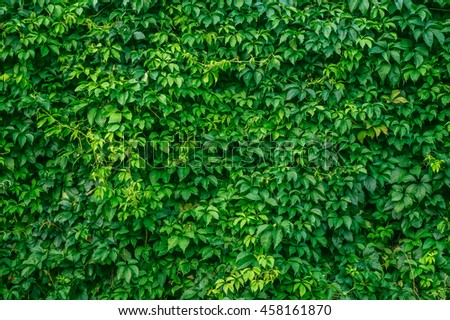 Green leaves background - stock photo