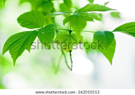 Green leaves background in the summer