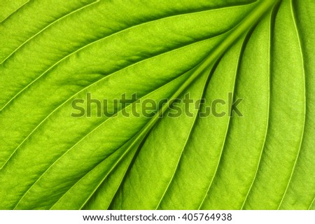 Green leaves background. Leaf texture - stock photo