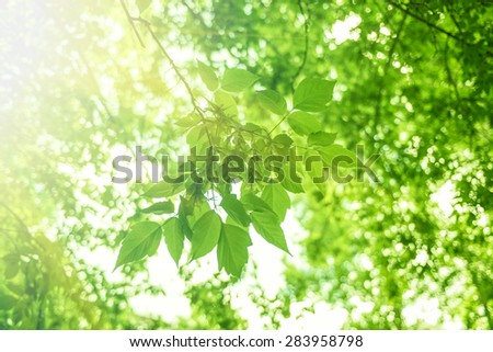 Green leaves background, summer time - stock photo