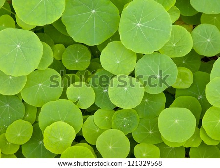 green leaves background - The round shape - stock photo