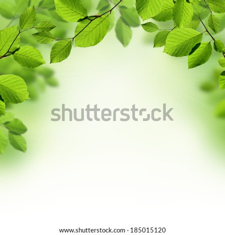 Green leaves border background  - stock photo