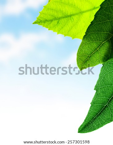 Green leaves border, fresh plant on sky background, abstract natural pattern, copy space, spring time season concept - stock photo