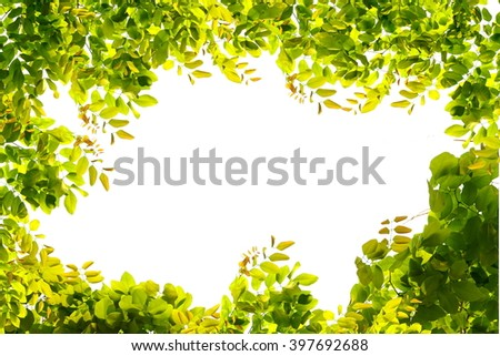 green leaves border nature on white isolate background with empty space - stock photo
