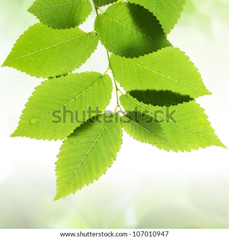 Green leaves border with bokeh background