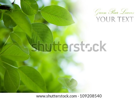 Green leaves border with copy space - stock photo