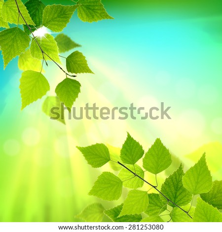 Green leaves branch whith sun rays on natural background. - stock photo