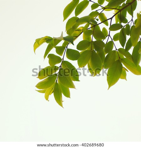Green leaves bunch over blur branches tree in forest - stock photo