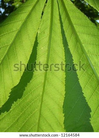green leaves close-up