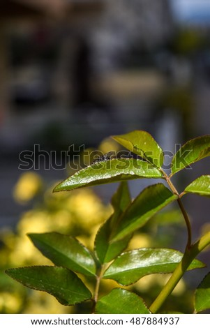 Green Leaves Close-up. Nature Background.
