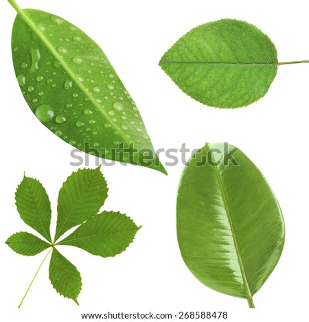 Green leaves collage - stock photo
