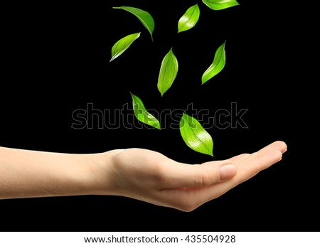 Green leaves falling into woman hands, isolated on black - stock photo