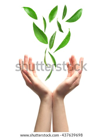 Green leaves falling into woman hands, isolated on white - stock photo