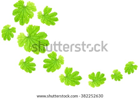 Green  leaves falling  isolated on white background  - stock photo