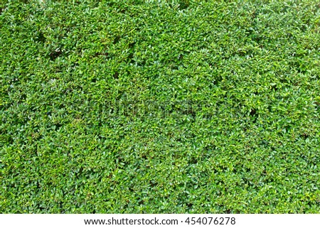 Green leaves for background - stock photo