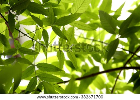 Green leaves for backgrounds