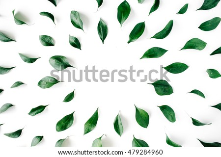 green leaves frame on white background. flat lay.