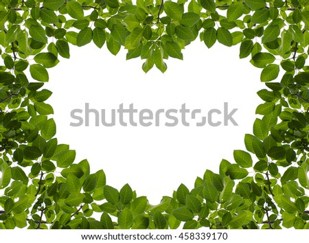 Green leaves frame or border with space in heart shape isolated on white background, room for texts. - stock photo