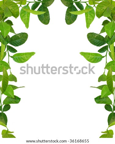 green leaves frame - similar images available - stock photo