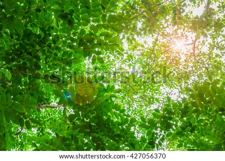 green leaves ,green leaf,leaf with sunlight background - stock photo