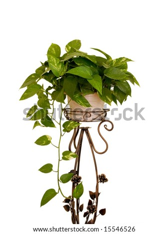Green leaves houseplant placed on a cuprous stand,isolated on white background - stock photo