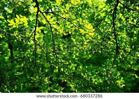 https://thumb1.shutterstock.com/display_pic_with_logo/167494286/680337286/stock-photo-green-leaves-in-a-park-in-japan-680337286.jpg