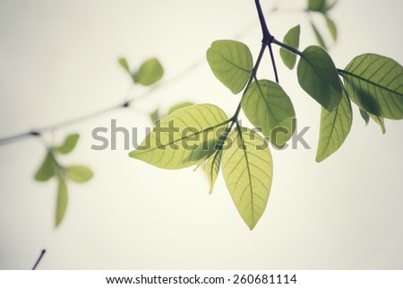 Green leaves in autumn - stock photo