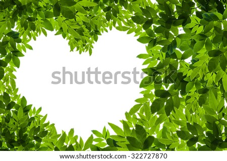 Green Leaves in heart shape on white background - stock photo
