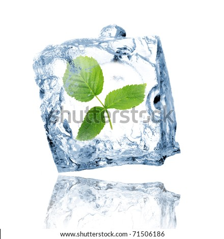 Green leaves in ice cube - stock photo