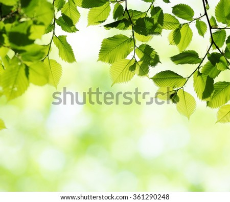 Green leaves in sunny spring day. Natural background with blurred bokeh. Selective focus - stock photo
