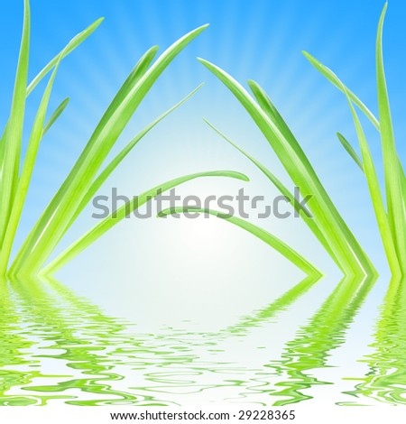 Green leaves in sunshine with water reflection