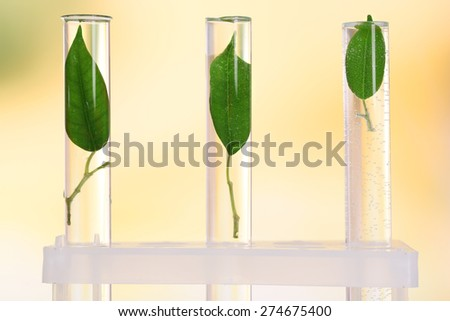 Green leaves in test tubes on light blurred background - stock photo
