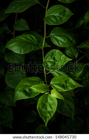 Green leaves in the dark climate - stock photo