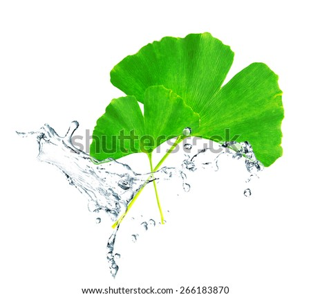 Green leaves in water splashes isolated on white - stock photo