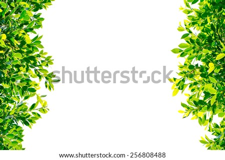 green leaves isolated on white background