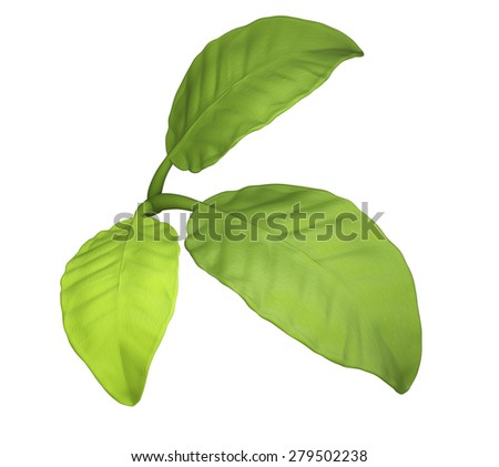 Green leaves isolated on white background. 3d render - stock photo