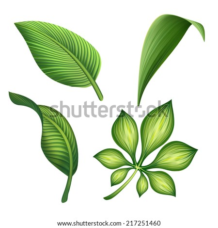 green leaves isolated on white background, foliage design elements  - stock photo