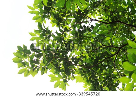 green leaves nature  on white background - stock photo