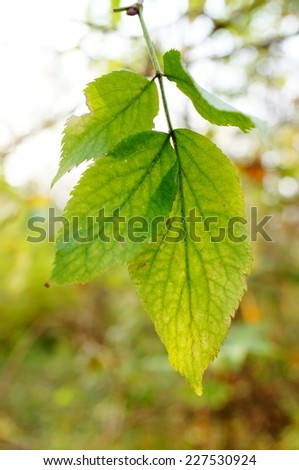 Green leaves of an tree