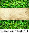 Green leaves of clover and paper - stock photo