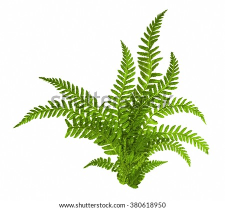 Seamless Space Background Fern Stock Images, Roy...