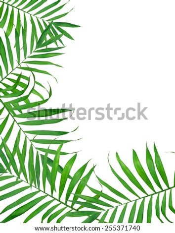 Green leaves of fern over white background - stock photo