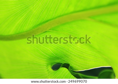 Green Leaves of Life - Nature Background and Texture - Colorful Beauty - stock photo