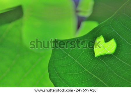 Green Leaves of Life - Nature Background and Texture - Loving Beauty and Heart-shaped Inspiration  - stock photo