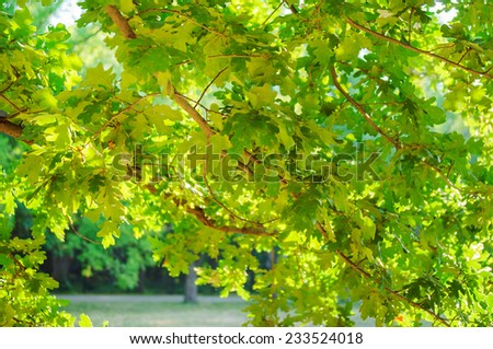 Green leaves of the tree in summer - stock photo