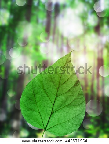 green leaves on a background the forest - stock photo