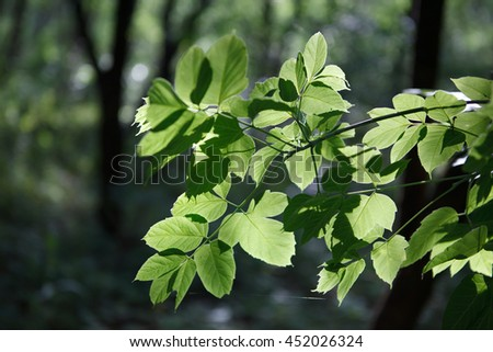 green leaves on a branch in the forest - stock photo