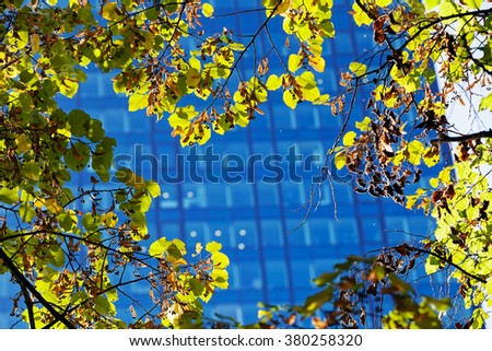 Green leaves on a tree branch in front of modern building with glass facade - stock photo
